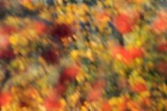 秋天颜色 图库摄影