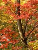 秋天颜色 库存照片