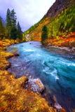 秋天风景、河和树 库存照片