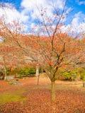 秋天风景、黄色、橙色和红色秋天树和叶子,五颜六色的叶子在秋天公园在京都 免版税库存图片