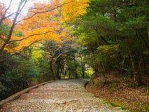 秋天风景、黄色、橙色和红色秋天树和叶子,五颜六色的叶子在秋天公园在京都 库存图片