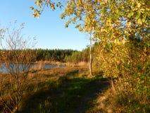 秋天风景与湖和森林好日子 免版税库存照片