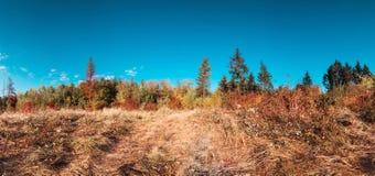 秋天风景五颜六色的全景 免版税库存图片