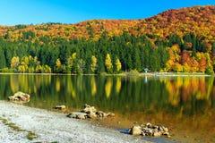 秋天风景和五颜六色的森林, St阿那湖,特兰西瓦尼亚,罗马尼亚 免版税图库摄影