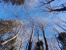 秋天风景和蓝色 免版税库存照片