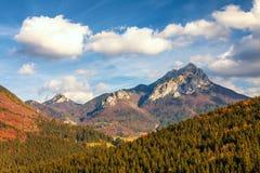 秋天风景在一个国家公园Mala Fatra 库存图片