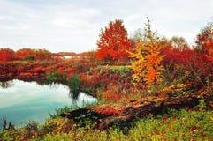 秋天风景在充满活力的颜色秋天在有小河的森林里长满与芦苇 免版税图库摄影