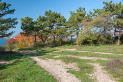 秋天风景在公园区域。 库存图片