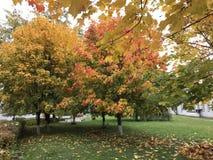 秋天风景在城市公园 与红色和黄色叶子的树引人注意以与下落的绿草为背景 免版税库存图片