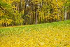 秋天风景在城市公园 温暖的10月晴天,许多下落的叶子 季节 在金黄颜色的自然本底 库存图片