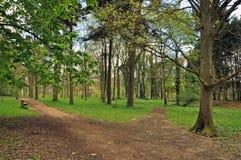 秋天风景在教务长森林里  库存图片