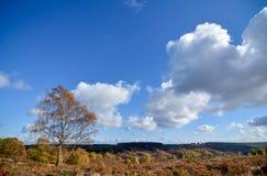 秋天风景在斯塔福德郡,英国 库存图片