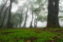 秋天风景在有早晨薄雾的森林里 免版税图库摄影