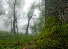 秋天风景在有早晨薄雾的森林里 免版税库存照片