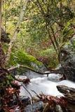 秋天风景在有柔滑的流动在长的曝光的缎软的河的森林里 免版税库存图片