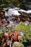 秋天风景在有柔滑的流动在长的曝光的缎软的河的森林里 库存图片