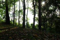 秋天风景在有树和干燥叶子的阴影的一个森林里在一棵草在一个晴天 免版税库存照片