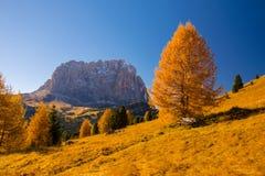 秋天风景在有长凳在美丽的黄色落叶松属树下和Sassolungo山的白云岩阿尔卑斯在背景 库存照片