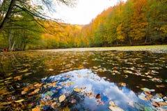 秋天风景在森林和湖里 免版税库存照片