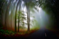 秋天风景在森林里 免版税库存照片