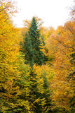 秋天风景在森林里 免版税库存图片