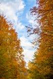 秋天风景在森林里 库存照片
