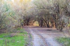 秋天风景在森林11月,下落的叶子和树光秃的分支里  免版税图库摄影