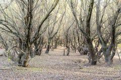 秋天风景在森林11月,下落的叶子和树光秃的分支里  库存照片