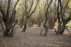 秋天风景在森林11月,下落的叶子和树光秃的分支里  免版税库存图片