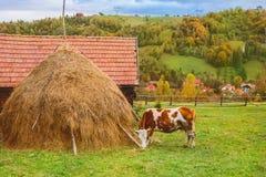 秋天风景在特兰西瓦尼亚 库存照片