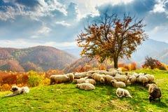 秋天风景在罗马尼亚喀尔巴汗 免版税库存照片