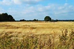 秋天风景在荷兰 免版税库存图片