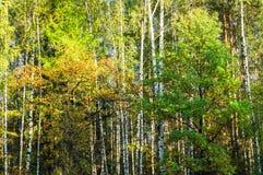 秋天风景在莫斯科附近的混杂的森林里 库存图片