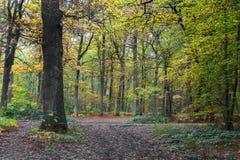 秋天风景在蒙莫朗西森林里  库存照片