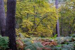 秋天风景在蒙莫朗西森林里  库存图片