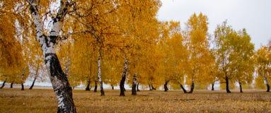 秋天风景在Ile Alatau 图库摄影