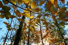 秋天风景奥地利树离开天空背景 免版税库存图片
