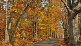 秋天风景小路在巴克斯县,宾夕法尼亚 库存照片