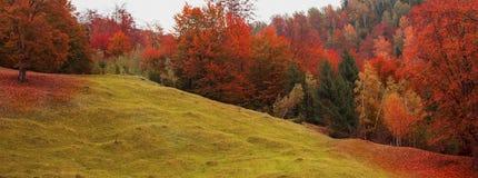 秋天风景有草甸和树fo风景五颜六色的看法  免版税库存照片