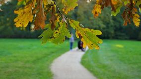 秋天风景树是被染黄的叶子 免版税库存照片