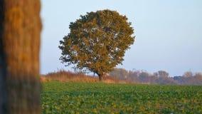 秋天风景树是被染黄的叶子 免版税库存图片