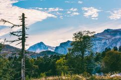 秋天风景烘干了杉木、烟从营火,旅客汽车和森林背景山脉的Tybga 库存照片