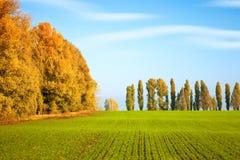 秋天风景用冬麦 免版税库存照片