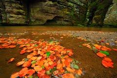 秋天风景用桔子和黄色在水,大岩石, Kamenice河中在背景中离开,在捷克国家公园, C 图库摄影