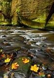 秋天风景用桔子和黄色在水,大岩石, Kamenice河中在背景中离开,在捷克国家公园, C 免版税库存照片
