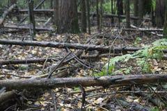 秋天风景秋天有光秃的树和干燥下落的五颜六色的叶子的公园胡同 库存照片