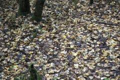 秋天风景秋天有光秃的树和干燥下落的五颜六色的叶子的公园胡同 免版税图库摄影