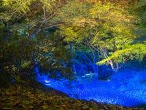 秋天风景美丽的景色与黄色秋天树和叶子,五颜六色的叶子的在秋天公园在京都,在 图库摄影