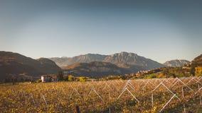 秋天风景葡萄园,葡萄酒作用 库存图片