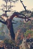 秋天风景葡萄酒照片- Pieniny山,波兰 库存照片